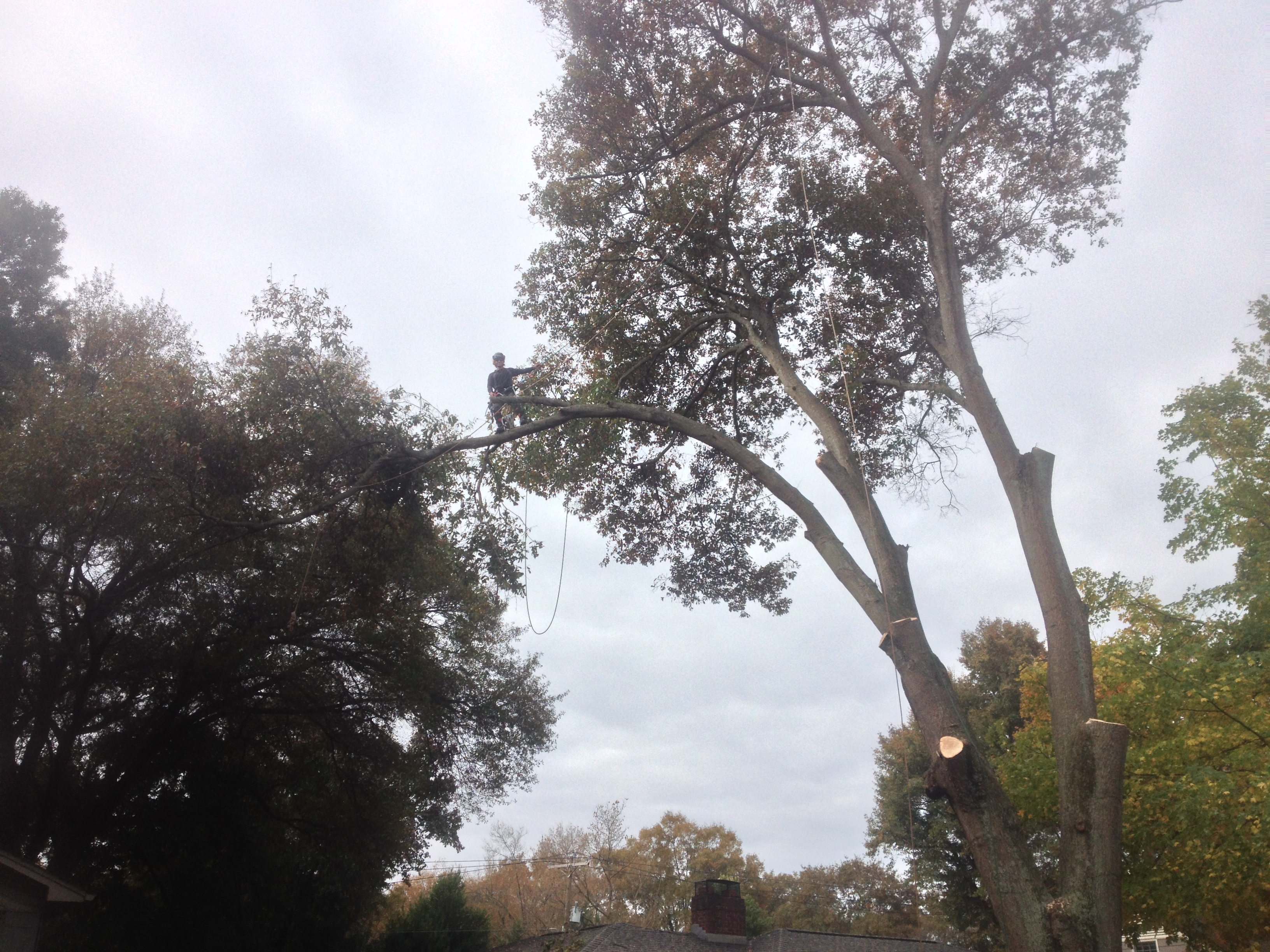 Gallery | Out On A Limb Tree Service
